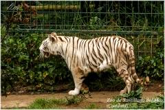 Santillana del Mar. Zoo.