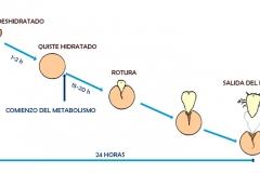 Artemia-14