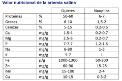 Artemia-16