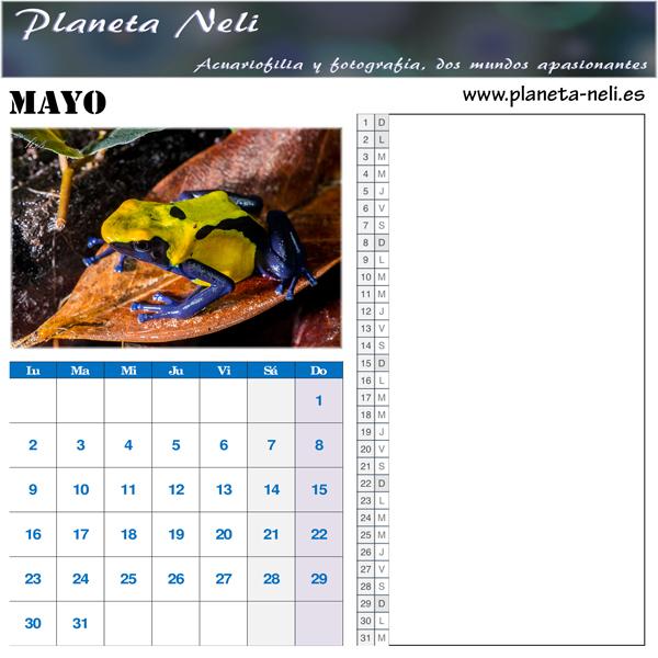 2016-05-Mayo