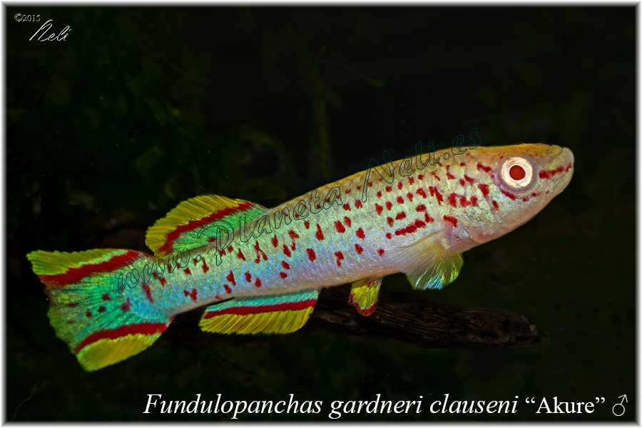 Fd clauseni