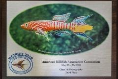 American Killifish Association